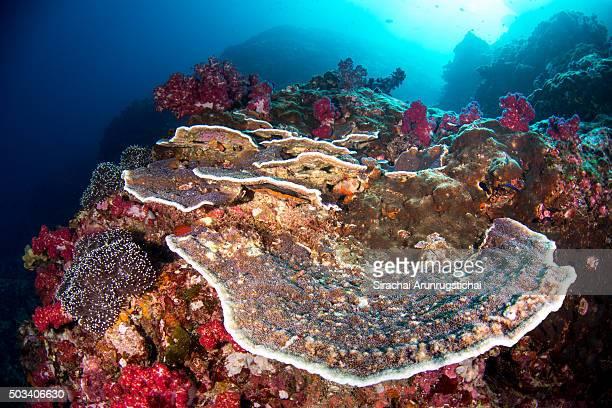 Underwater colourful reef scene