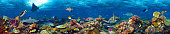 underwater coral reef landscape super wide banner background  in the deep blue ocean with colorful fish and marine life