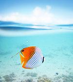 Underwater in Bora Bora