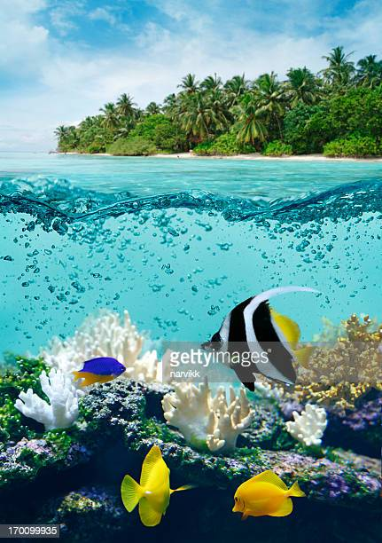 Underwater life in tropical sea