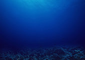 Bottom of the sea background.