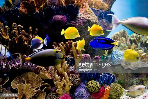 Underwater Scene Of Bright Colored Tropical Fish Stock