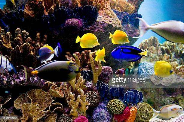 Underwater scene of bright colored tropical fish