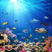 Exotic Fish On Seabed With Sunlight