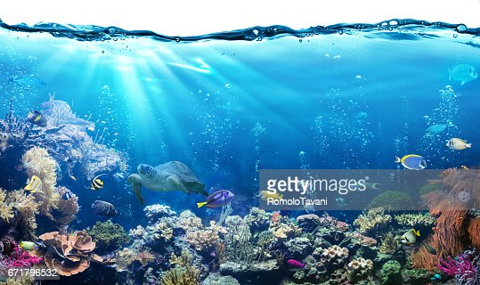 Underwater Scene With Reef And Tropical Fish : Stock Photo
