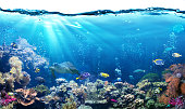 Great Barrier Reef  With Sea Life