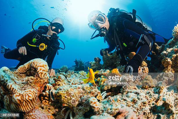 Underwater scene with scuba divers coral and anemone  clownfish