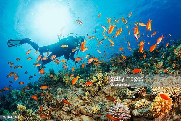 Subaquática de mergulhador explorar e desfrute de recife de Coral Vida no Mar