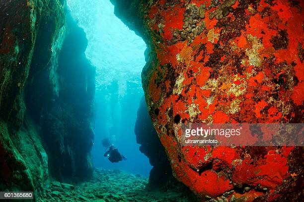 Underwater  Scuba divers   Explore coral reef   Sea life orange sponge