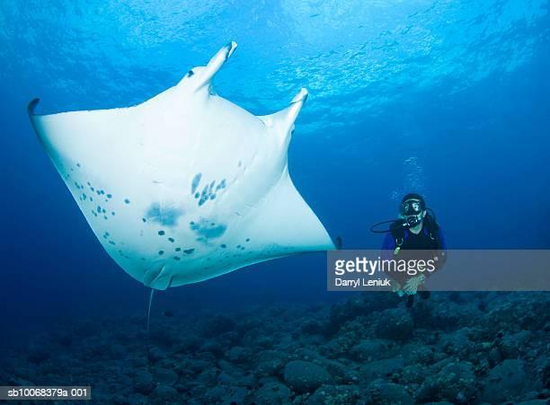 Underwater shot of diver and manta ray (Manta birostris)