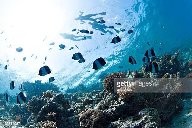 underwater snorkling reef