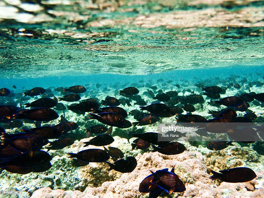 Underwater Technicolor : Stock Photo
