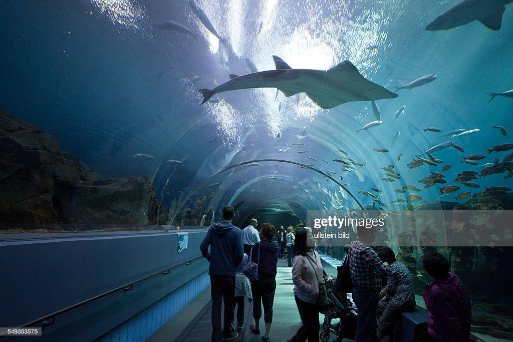 Underwater Tunnel In The Georgia Aquarium In Atlanta
