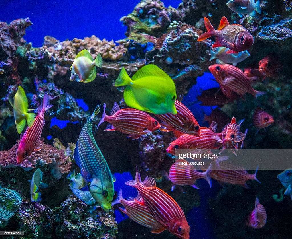 Underwater view of colorful tropical fish maui hawaii for Colorful tropical fish