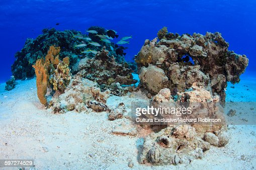 Underwater view of coral atoll at Beveridge Reef, Niue, South Pacific