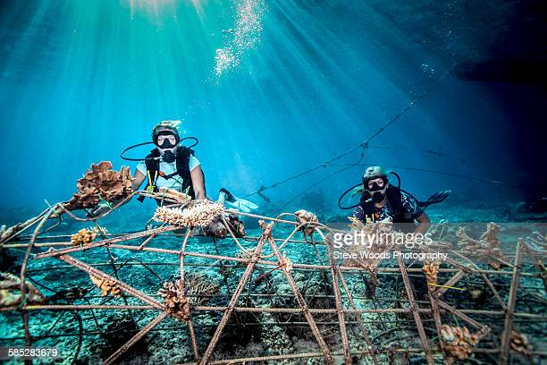 Underwater view of female divers fixing a seacrete on seabed, (artificial steel reef with electric current), Lombok, Indonesia