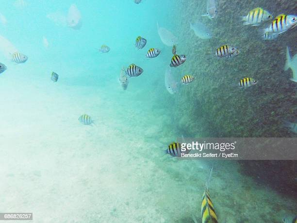 Underwater View Of Fish Swimming In Sea