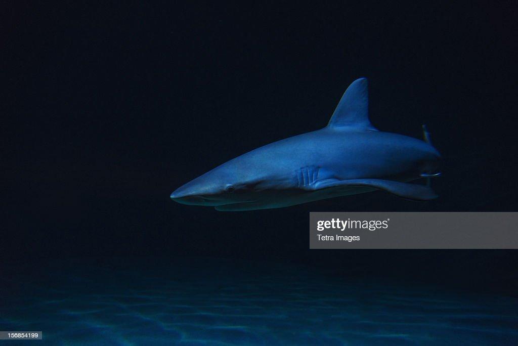 Underwater view of shark in sea : Stock Photo