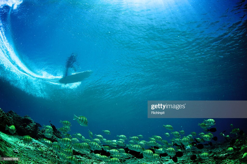 Underwater view of surfer through the wave with tropical fish : Stock Photo