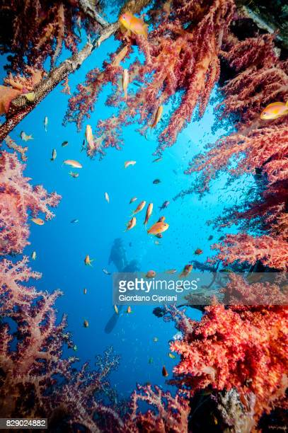 Underwater world of The Gulf of Aqaba or Gulf of Eilat, northern tip of the Red Sea, east of the Sinai Peninsula and west of the Arabian mainland.