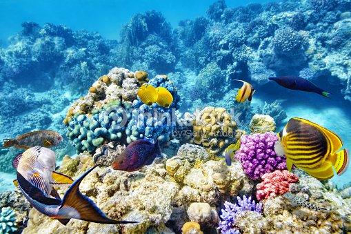 Monde sousmarin de coraux et de poissons tropicaux photo for Poisson tropicaux