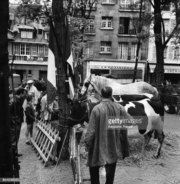 Une vache et un cheval sur la Place du Tertre à Paris France le 11 mai 1961