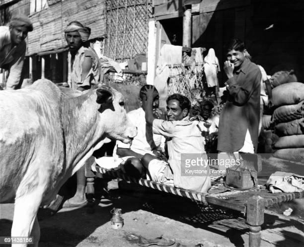 Une vache sacrée interrompt le travail d'un coiffeur dans la rue à New Delhi Inde