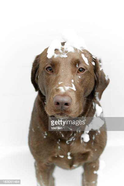Unhappy Dog Bath