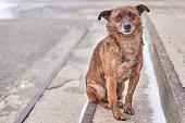Unhappy cute stray dog with sad eyes on a city street