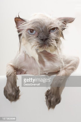 Unhappy Wet Cat Stock Photo | Getty Images