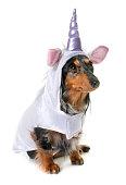 unicorn dachshund in front of white background