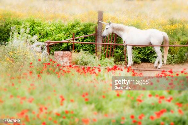 Unicorn in a field of poppies.