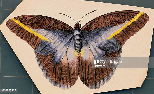 Unidentifed blue yellow and brown butterfly with its wings spread open