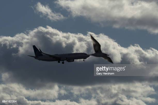 United Airlines airplane passes a bird on approach to Newark Liberty Airport on May 15 as seen from Elizabeth New Jersey
