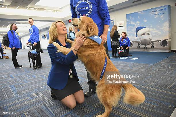 United Airlines employee Kim Denning greets Patsy a golden retriever that was part of United Paws an United Airlines program that allows passengers...