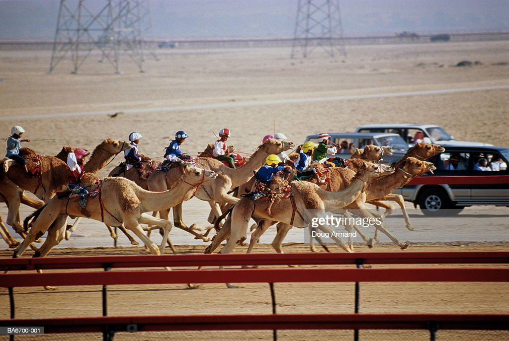 United Arab Emirates, Dubai, camel racing, side view across track : Stock Photo