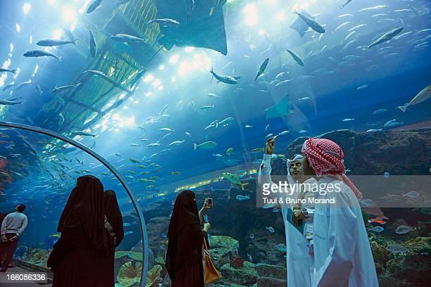 United Arab Emirates, Dubai, Mall, Aquarium
