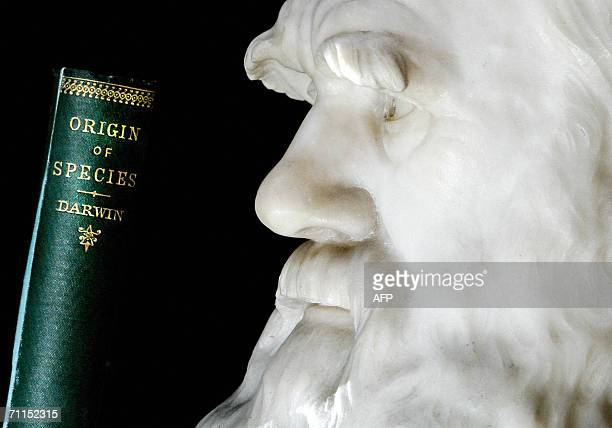 A copy of Darwin's book the 'Origin of Species' is pictured in front of a life size stone bust of Charles Darwin at London's Natural History Musuem...