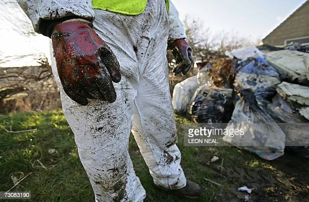 Members of the Dorset Countryside Ranger Service remove oilcovered refuse from Chesil beach near Abbotsbury in Dorset in southern England 23 January...