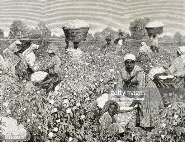 United States Picking cotton Engraving 1878