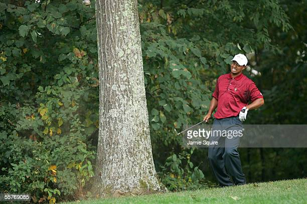 United States team player Tiger Woods grimaces in pain grabbing his back after hitting from the trees on the 17th hole during Sunday Singles matches...