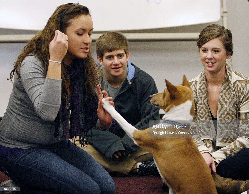 University of North Carolina freshmen Laura Gamo, left-right, along with Lucas John and sophomore Haley Ross play with Mickey, an 11-year-old basenji, at Park Library in Carroll Hall at UNC, Chapel Hill Wednesday, December 12, 2012. Mickey was one of this fall's therapy dogs used during exam week to help students and staff deal with the stressful period.