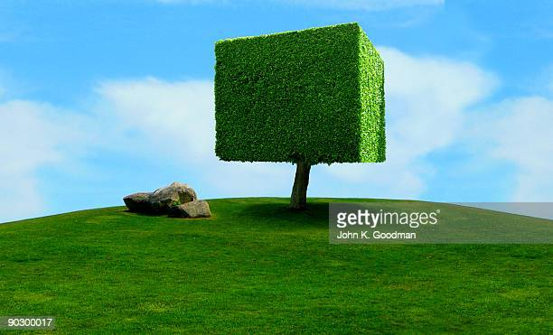 Unlikely Topiary