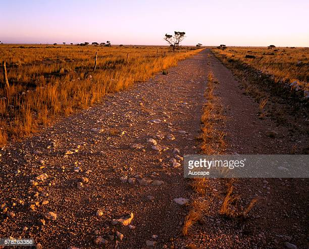 Unmade road on the Nullarbor Plain Nullarbor National Park South Australia Australia