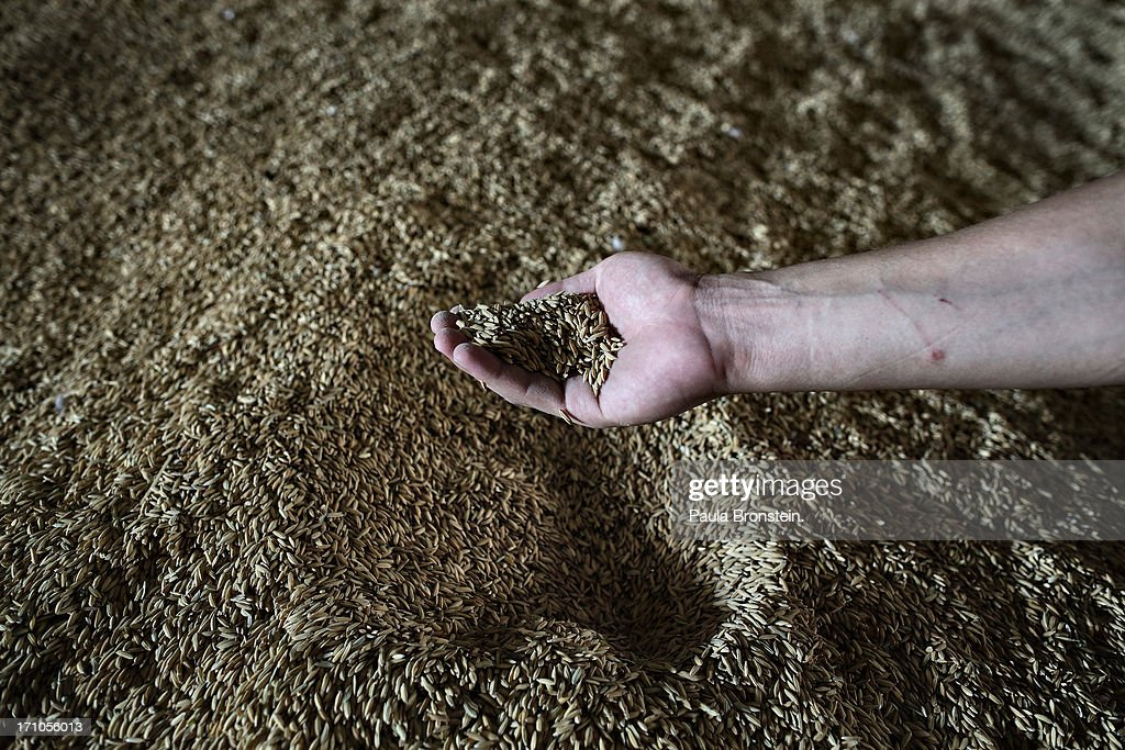 Unmilled rice is seen at a warehouse at the Settapanich -Samchuk rice mill in on June 20, 2013 in Suphan Buri, Thailand. Thailand plans to sell as much as 7 million metric tons from inventories in order to fund a grain purchase program. Recently financial sources revealed that the actual losses from the government's controversial rice pledging scheme for the 2011-12 rice harvest year are close to reaching 200 billion baht [US$6.5 billion], this is far above the Thai Finance Ministry's earlier forecast of 70-100 billion baht.