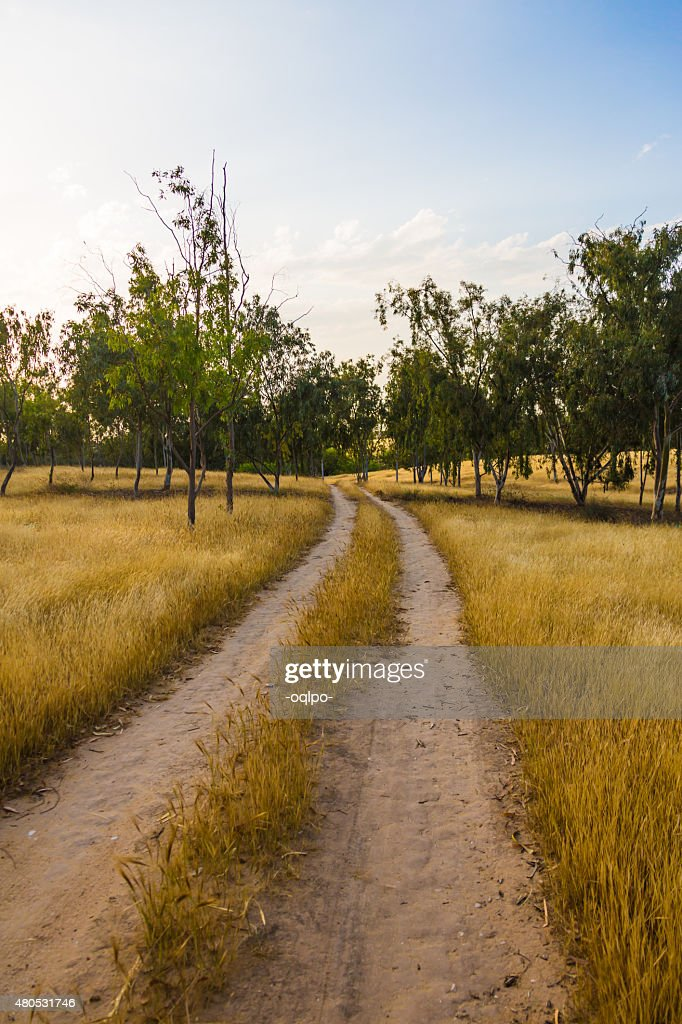 unpaved road in the field : Bildbanksbilder