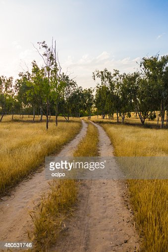 unpaved road in the field : Stock Photo