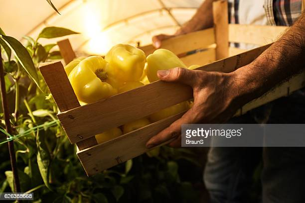 Unrecognizable farmer with a wooden crate full of bell peppers.