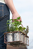 Unrecognizable person carrying basket with herb pots, mid section, rear view