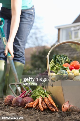 Unrecognizable person digging with pitchfork, low section, assorted vegetables in foreground